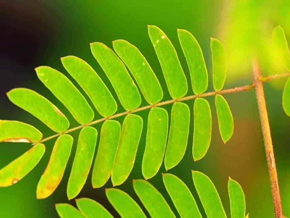 Exotengarten: Blätter 1