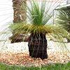 Grasbaum: Steckbrief 6