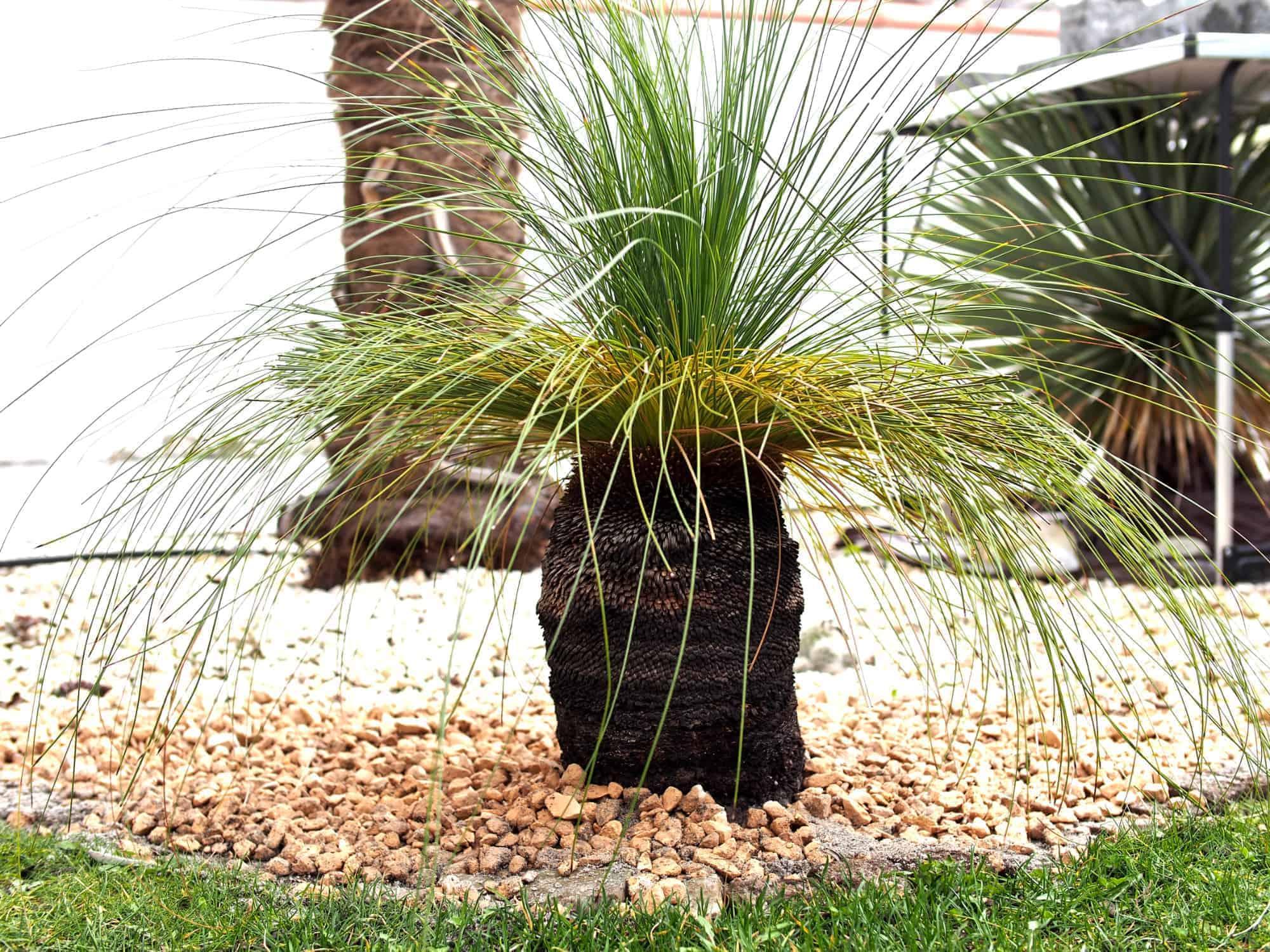 Grasbaum: Steckbrief 1