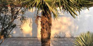 5 Exotengarten-Lieblinge meiner Gäste