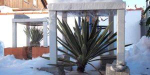 """Yucca: Winterschutz-Methode """"Überdachung"""""""