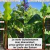 Exotengarten: Irrtümer 7