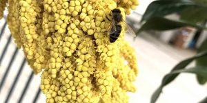 Exotengarten: Blüten + Insekten