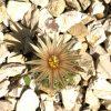 Cactaceae: Kauf + Auspflanzung 1