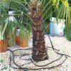 Winterschutz von Exoten: Heizkabel-Arten 1
