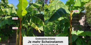 Exotengarten: Irrtümer