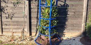 """Nerium oleander: Winterschutz-Methode """"Umhausung"""""""