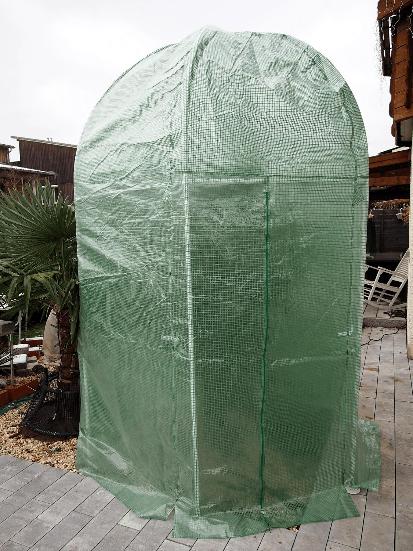 Olivenbaum: Winterschutz-Aufbau 1