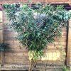 Gartenblog 288