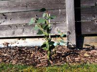 Gartenblog 118