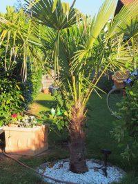 Gartenblog 104