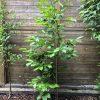 Gartenblog 321