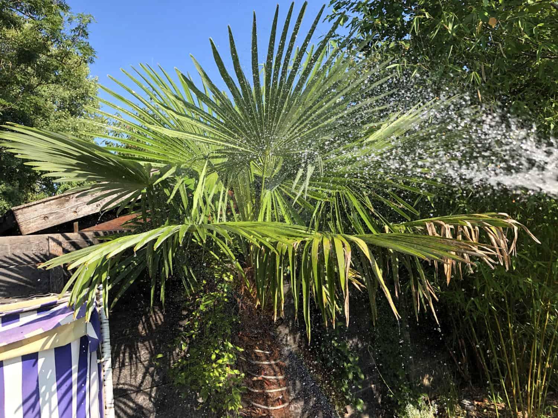 Wasserbedarf von exotischen Pflanzen 1