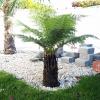 Gartenblog 219