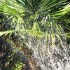 Wasseraufnahme von Pflanzen 10