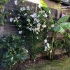Gartenblog 289