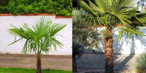 Exotengarten: chronologische Vergleichsfotos