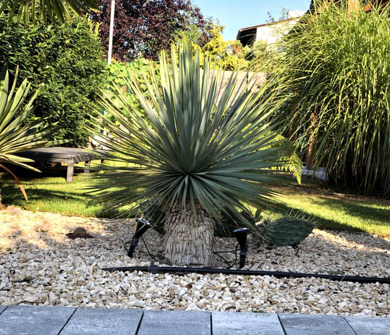 Exotische Pflanzen für Einsteiger 1