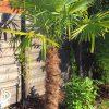 Gartenblog 264