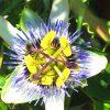 Gartenblog 338