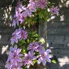 Gartenblog 295