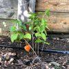 Gartenblog 87