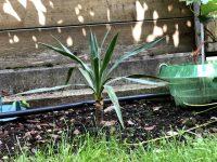 Gartenblog 136