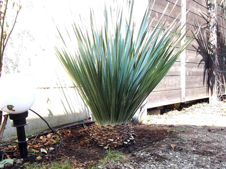 Chronologisches Stammwachstum meiner exotischen Pflanzen 1