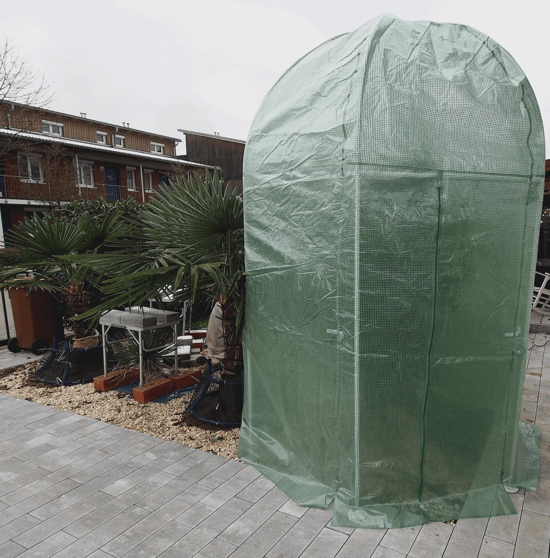 Olivenbaum: Winterschutz-Programm 1