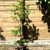 Gartenblog 82