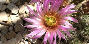 Exotengarten: Blüten