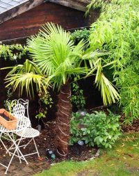 Gartenblog 225