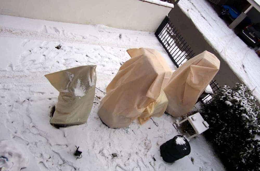 Chronologischer Winterschutz 1