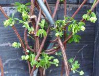 Gartenblog 124