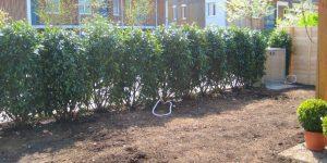 Baumassnahmen: 04'11 - Garten-Neuanlage