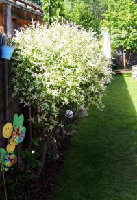 Gartenblog 237