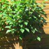 Gartenblog 309