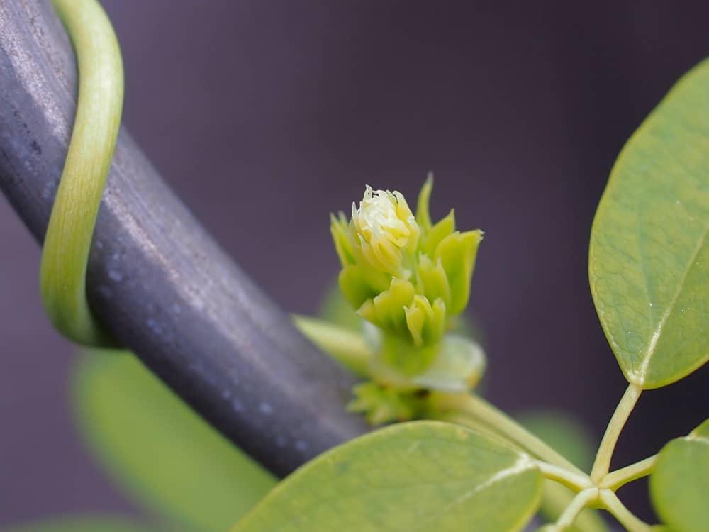 Bewegung von Pflanzen 1