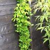 Gartenblog 265