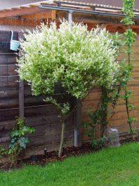 Gartenblog 236